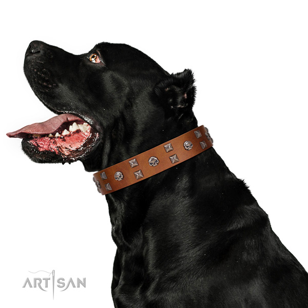 Everyday use soft natural leather dog collar with adornments