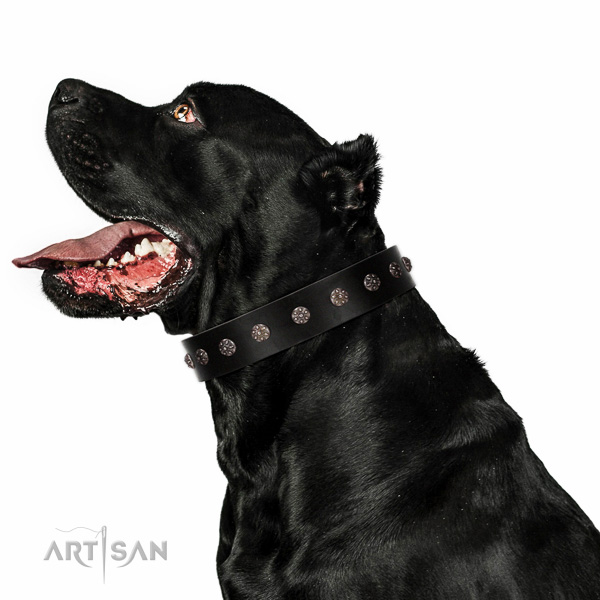 Handy use full grain natural leather dog collar with fashionable embellishments