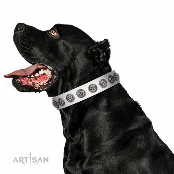 Best quality full grain leather dog collar created for your pet
