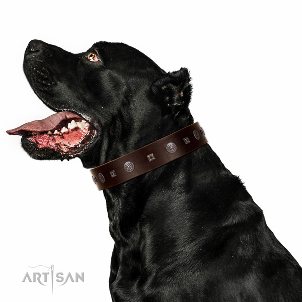 Strong hardware on comfy wearing collar for your dog