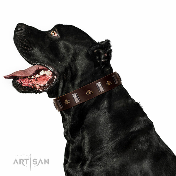 Durable full grain genuine leather dog collar crafted for your dog