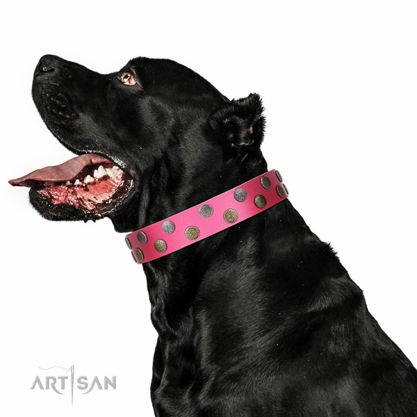 Reliable full grain leather dog collar with adornments for handy use