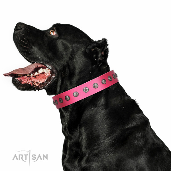 Natural leather dog collar with stylish design embellishments handcrafted dog
