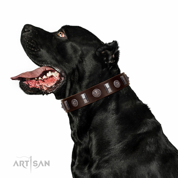 Stylish walking studded full grain genuine leather collar for your four-legged friend