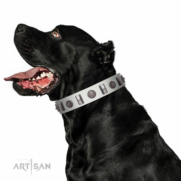 Everyday use decorated full grain genuine leather collar for your doggie