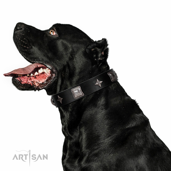 Fancy walking high quality leather dog collar with embellishments