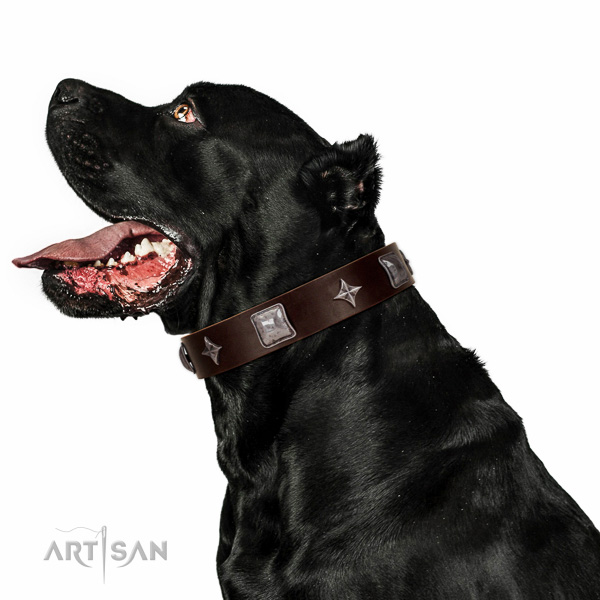 Exceptional dog collar handcrafted for your handsome four-legged friend