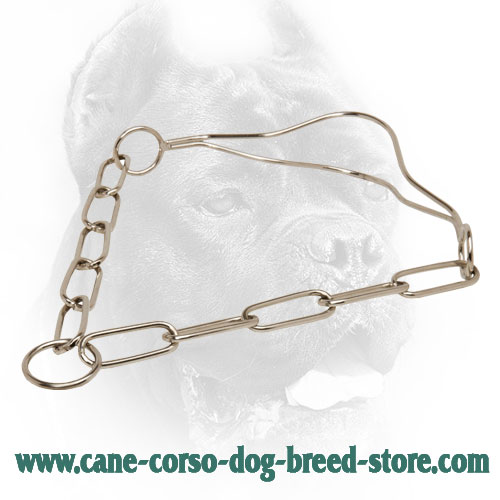 Strong Cane Corso Collar for Dog Shows