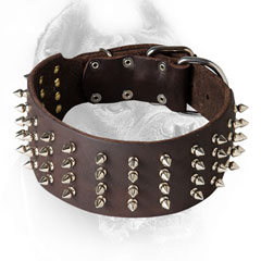Cane Corso Collar with Silver-Like Spikes
