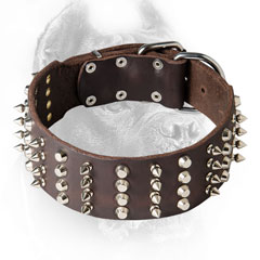 Cane Corso Collar with Nickel Plated Studs and Spikes