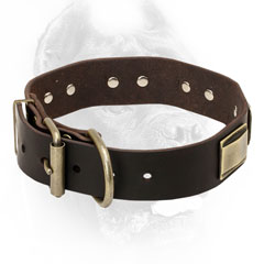 Cane Corso Collar with Gold-Like Buckle