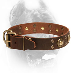 Cane Corso Collar with Strong Buckle