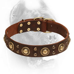 Cane Corso Collar with Brass Studs