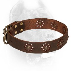 Brown Leather Cane Corso Collar with Punched Flowers