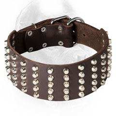 Strong Cane Corso Collar with Silver-Like Studs