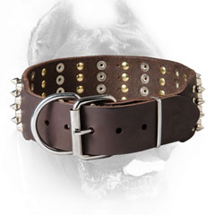 Decorated Cane Corso Collar with Strong Hardware