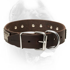Cane Corso Collar with Nickel Plated Fittings