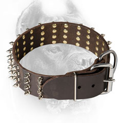 Decorated Cane Corso Collar with Hardware