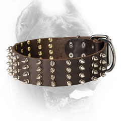 Cane Corso Collar with Nickel Plated Decorations