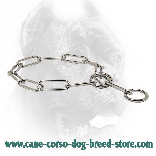 Chrome Plated Cane Corso Collar