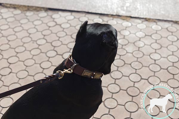 Cane Corso collar with brass D-ring