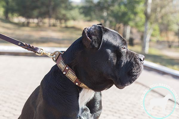 Decorated with plates Cane Corso genuine leather collar