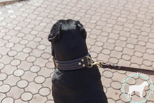 Cane Corso leather collar with durable hardware