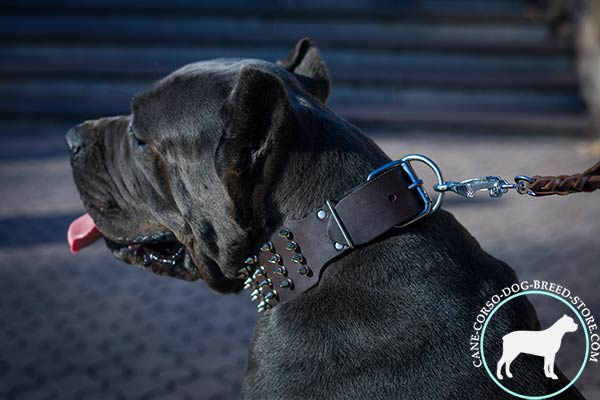 Cane Corso genuine leather collar with incredibly strong hardware