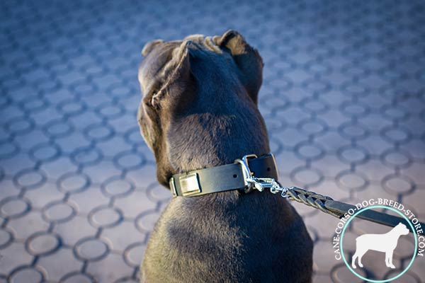 Cane Corso collar with D-ring for leash adjustment
