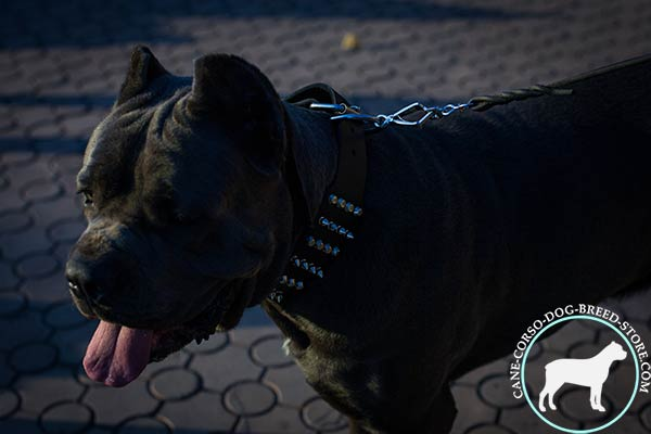 Cane Corso wide leather collar with manually set decor