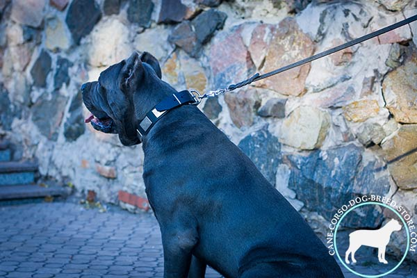 Cane Corso genuine leather collar with massive plates