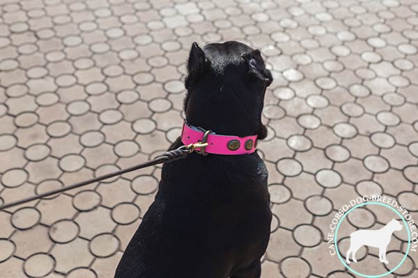 Leather dog collar with non-corrodible hardware