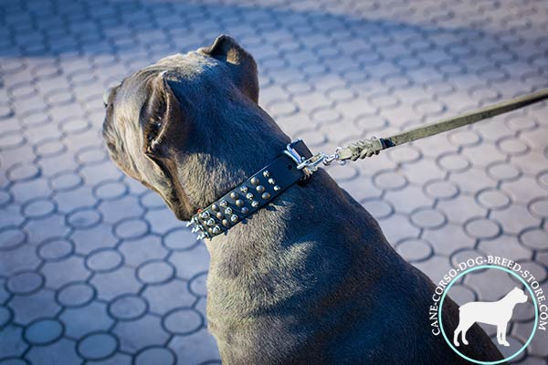 Cane Corso durable collar with non-corrosive fittings