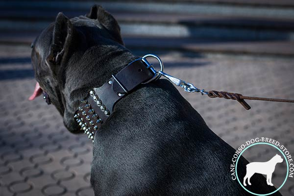 Cane Corso collar with reliable fittings