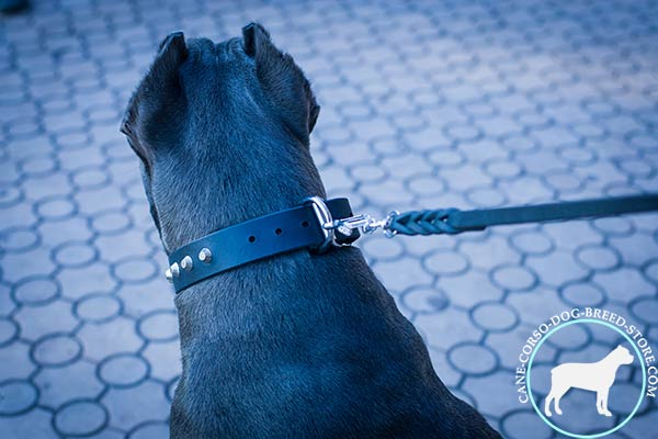Cane Corso pure leather collar with rust-proof hardware