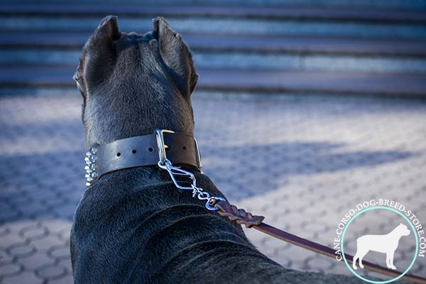 Cane Corso genuine leather collar with rust-resistant fittings