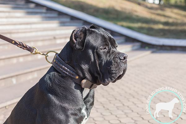 Cane Corso natural leather collar guarantees safety and comfort