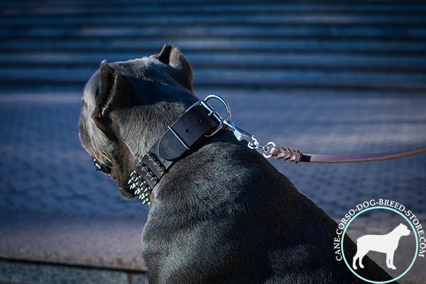 Cane Corso collar with time-proof hardware