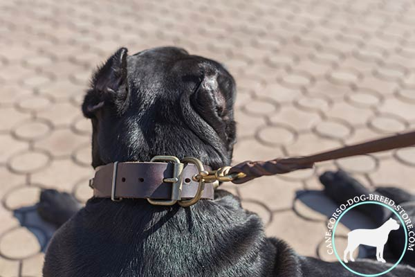 Cane Corso collar with top grade hardware