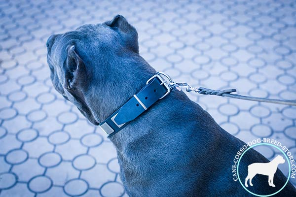 Cane Corso collar with unbreakable buckle