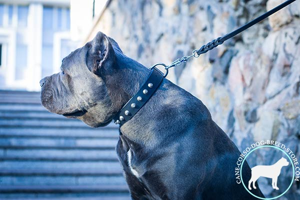 Unique design Cane Corso genuine leather collar
