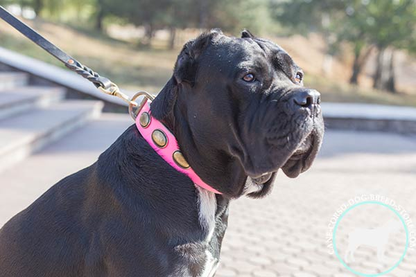 Cane Corso vintage pink leather collar