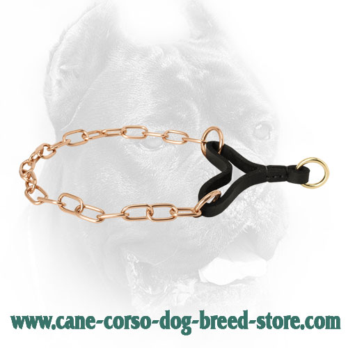 Curogan Cane Corso Martingale Collar for Behavior Correction