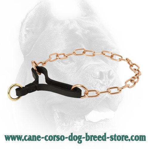 Curogan Cane Corso Martingale Collar for Training