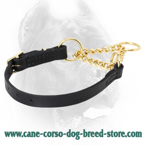 Brass and Leather Cane Corso Martingale Collar for Behavior Correction