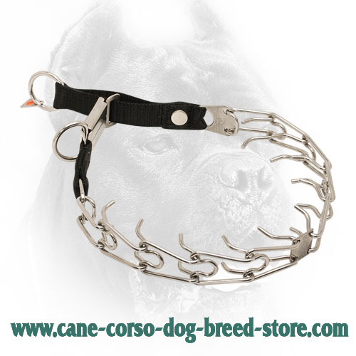 HS Cane Corso Pinch Collar with Nylon Loop