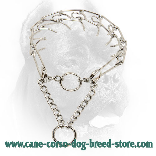 Smooth Cane Corso Pinch Collar with Evenly Arranged Prongs
