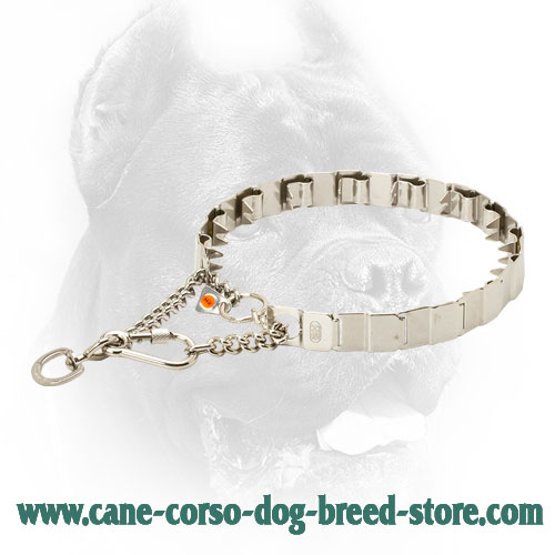 Neck Tech Top Grade Cane Corso Prong Collar