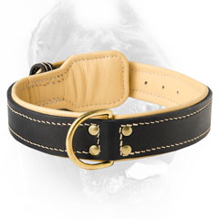 Exclusive Cane Corso collar with easy release buckle  and dee ring