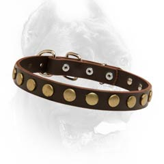 Extra ordinary leather dog collar